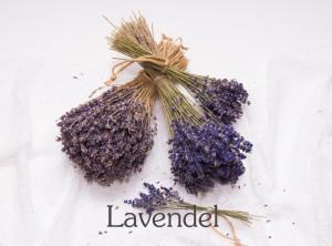 link_lavendel